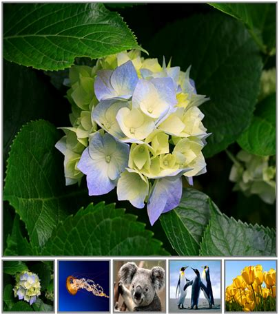 Jquery Image Gallery With Thumbnails Tutorial sql server net and c tutorial jquery image gallery