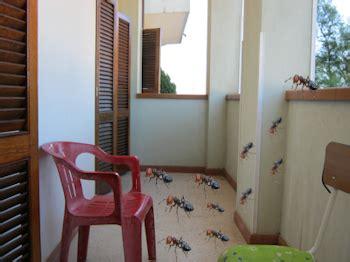 invasione di formiche in cucina bisbigli come liberarci delle formiche in casa e sui balconi