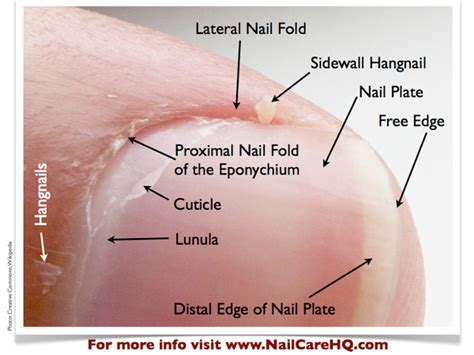 nail bed definition hangnail treatment ask ana dealing with hangnails bliss kiss