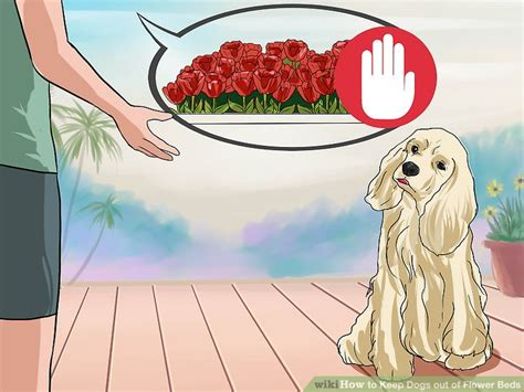 keep dogs out of flower beds how to keep dogs out of flower beds 12 steps with pictures