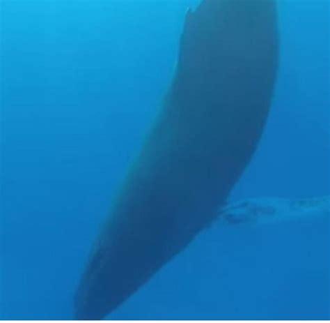 wie schlafen wale faszinierendes so schlafen buckelwale welt
