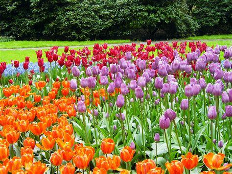 imagenes de jardines ingleses file keukenhof holanda 002 jpg wikimedia commons
