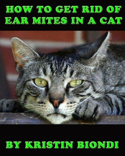 how to get rid of cats in your backyard how to get rid of ear mites in a cat by kristin biondi 2