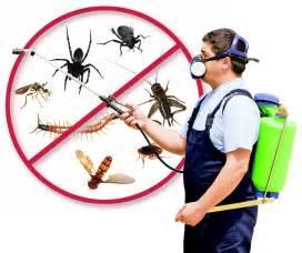 house pest control home acc pest control lauderhill florida