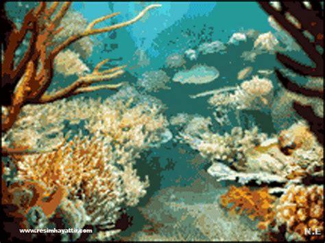 wallpaper bergerak laut kumpulan animasi bergerak ikan animasi dan gambar bergerak