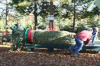 christmas tree farms in sacramento magnifica tree farm placerville ca kid friend trekaroo