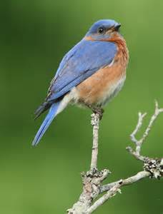 brenda s nature photography and birds of virginia