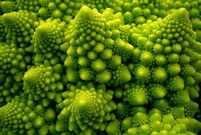 patterns in nature permaculture temperate climate permaculture fractal patterns in nature