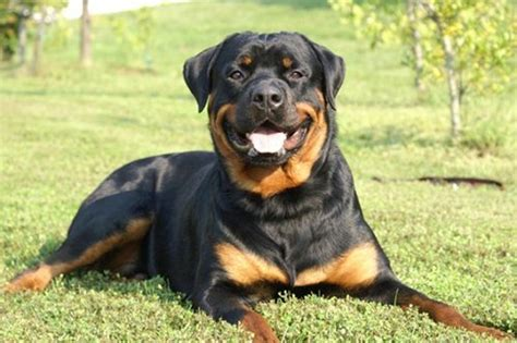 every breed 10 best breeds world s best guard dogs