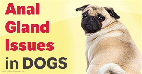 gland problem in dogs how your pet s diet can contribute to gland problems