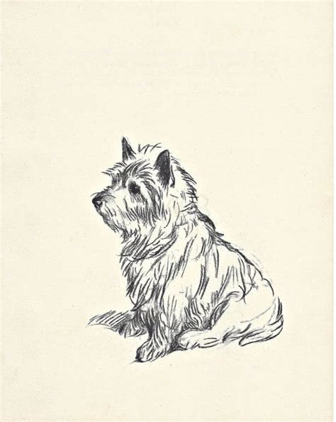 applied themes in english dawson 1000 ideas about english white terrier on pinterest