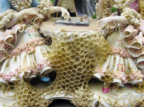 collaboration  bees artist aganetha dyck creates