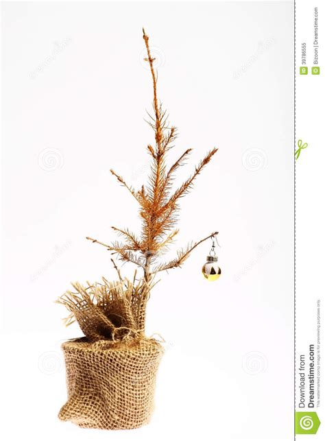 Small Log Cabin Plans Dead Christmas Tree Stock Photo Image 39786555
