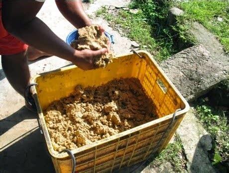 Fermentasi Pakan Ternak Dengan Ragi Tempe cara as tahu menjadi pakan alternatif lele alam ikan
