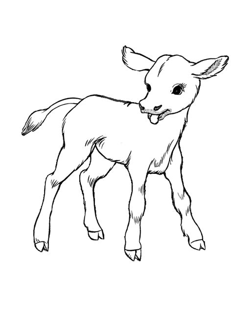 coloring page cute baby calf farm animal coloring