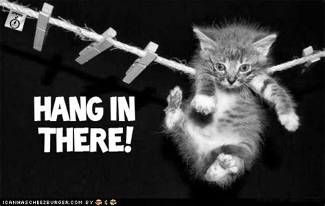 Hang In There Cat Meme - discouraging your dick right off oh noa the league of