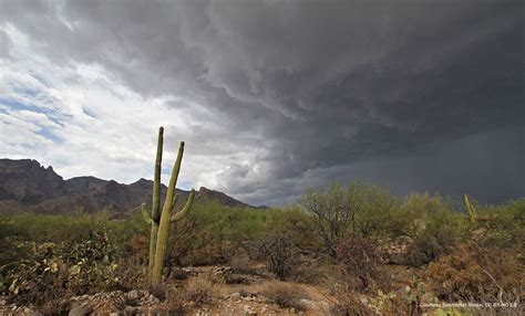 lattes desert monsoon books american southwest threatened by heavy monsoons