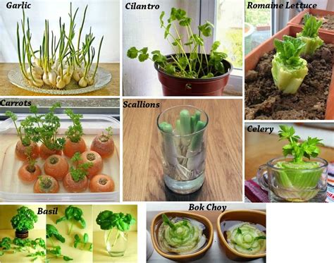 8 vegetables you can regrow 8 vegetables that you buy once and regrow forever