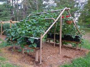 How To Build A Bean Trellis Cucumbers On A Trellis Town Amp Country Gardening