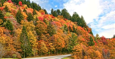 colors of the mountain smoky mountain fall colors best read guide smoky mountains