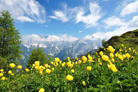 libro italian nature of photographs photography nature landscape summer wildflowers mountains clouds green yellow trees