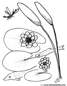 pad coloring page cattails plant coloring pages sketch coloring page