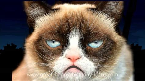cat songs songs to sing to your cat and other feline favourites books grumpy cat happy birthday song