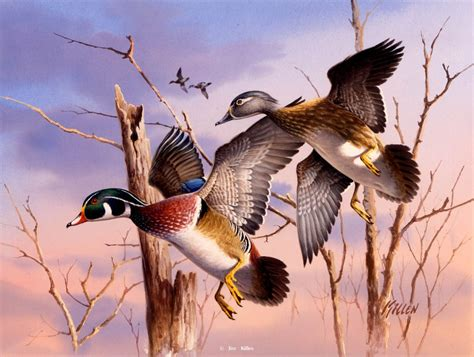 17 best images about painting ducks on pinterest old ducks in flight 100x755 animals ducks geese