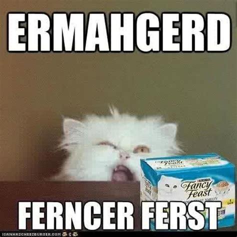Lol Memes Funny - lol funny meme ermerderd cat