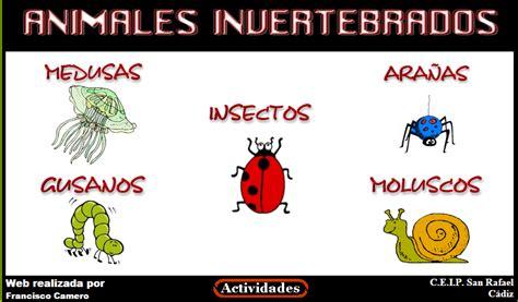 imagenes animales vertebrados e invertebrados para imprimir la ventana de mi clase animales vertebrados e invertebrados