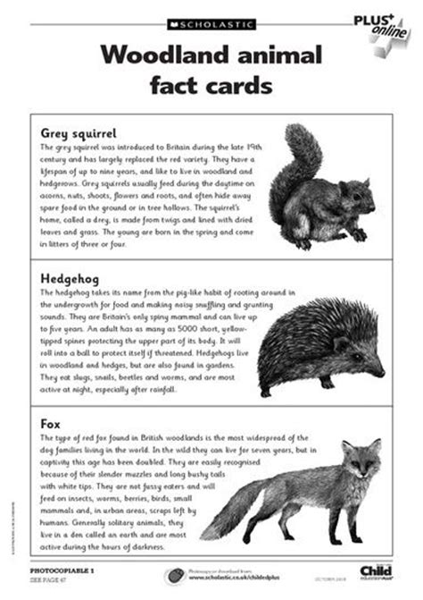 printable animal fact cards free primary animal worksheets animal fact cards to