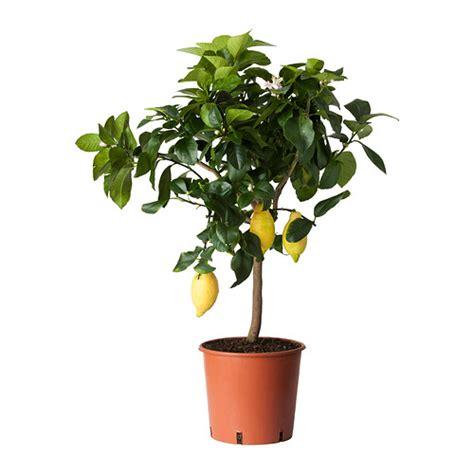 ikea outdoor plants house plants outdoor plants ikea ireland dublin