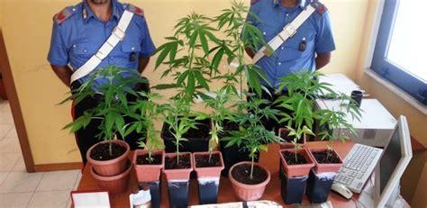 fiori marijuana tra i fiori della nonna i nipoti coltivavano la marijuana