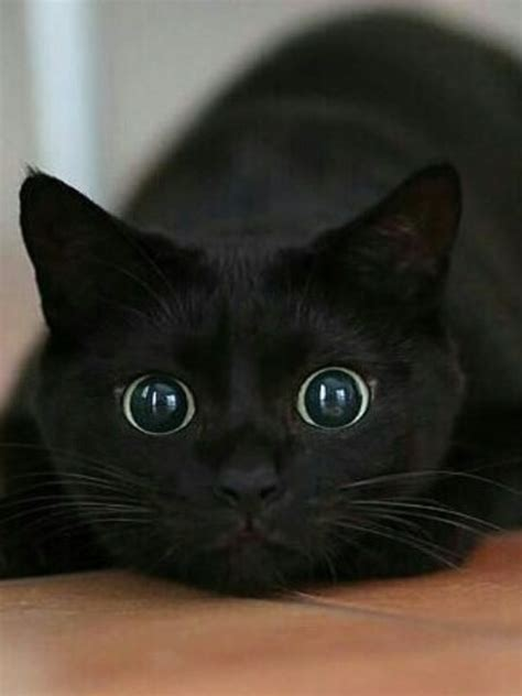 Show Me Your Cat Eye 5 by Activated If My Stared At Me Like
