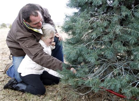 kris kringle trees tree sales to fast start area growers report business local news wcfcourier