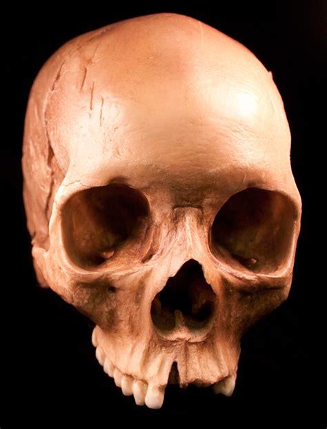 Human Skulls 54 Free Images Media Militia Skull On