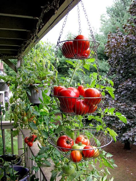 apartment patio vegetable garden ideas for garden narrow balconies you do not need a yard to