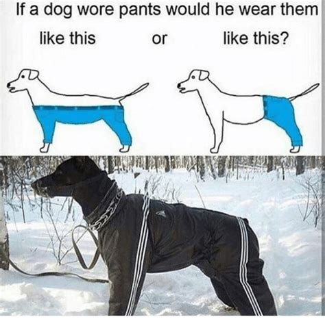 if dogs wore 25 best memes about if a wore if a wore memes