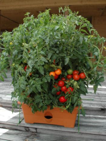 Planter Size For Tomatoes by The Garden Patch