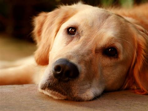 heartworm symptoms dogs disease breeds picture