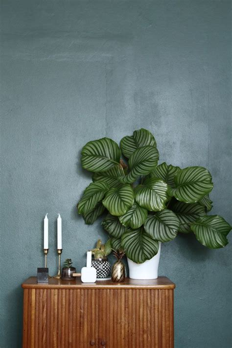 best plants for dark rooms 17 best ideas about dark green walls on pinterest dark