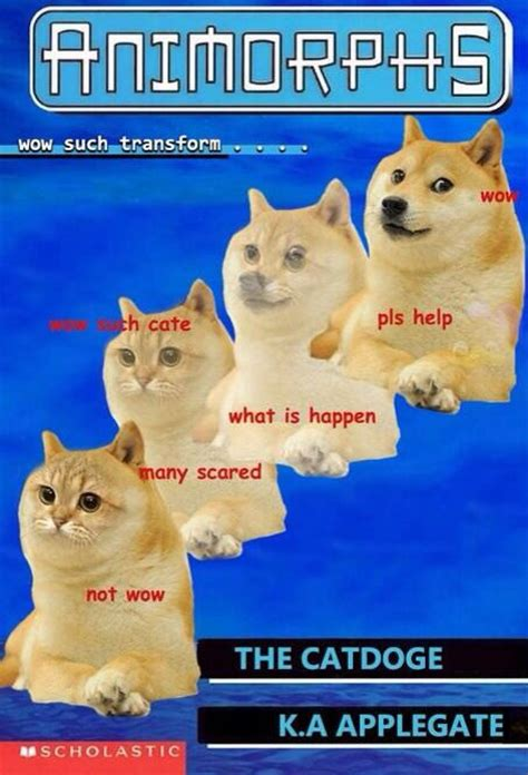What Is Doge Meme - doge meme memes