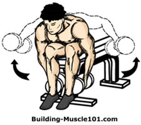 bent over lateral raises on incline bench dumbbell exercise illustrations to help you with your