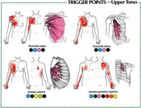 Front shoulder pain causes shoulder pain gadibody com neuromuscular