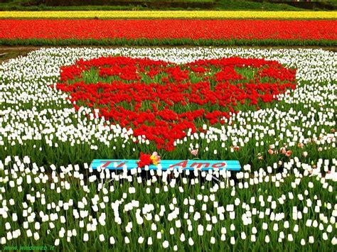 i fiori cuore con i fiori sfondi desktop gratis