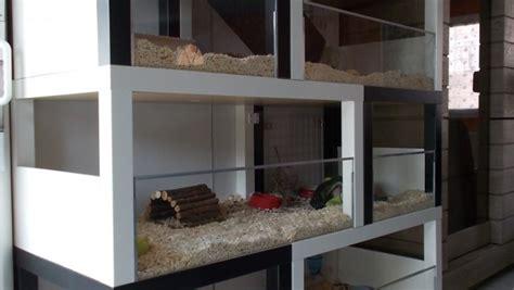 meuble de cuisine ind駱endant un meuble 224 cochon d inde 224 fabriquer 224 petit prix