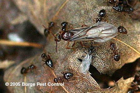 House Termites Nest