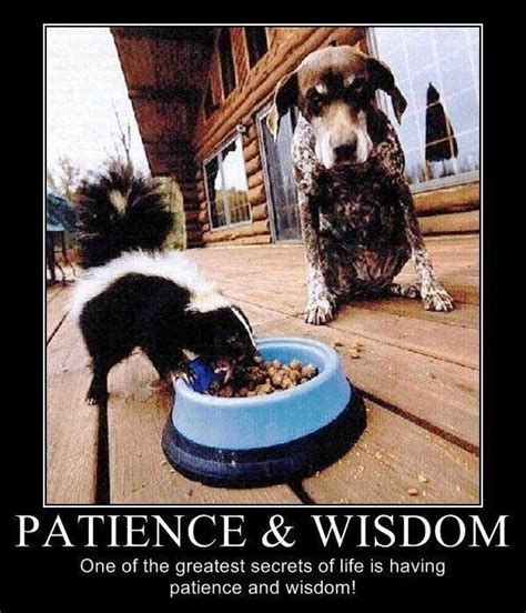 patience and wisdom one of the greatest secrets of