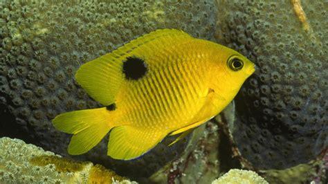 imagenes animales que viven en el mar banco de im 225 genes para ver disfrutar y compartir