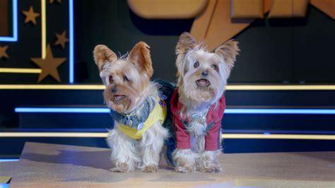 pup better 2gether pup better 2gether pup better 2gether est il
